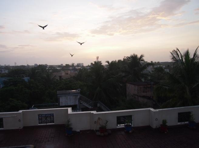 Crows in Flight at Sunrise, Thiruvanmiyur, Chennai, India