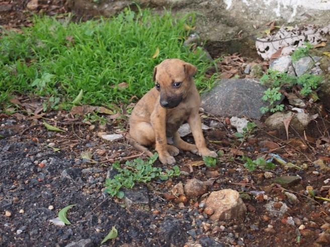 Sad Stray Puppy at Saint Thomas Mount, Chennai